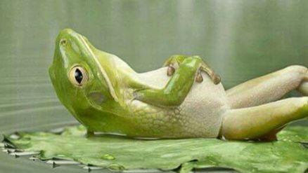 Click image for larger version  Name:Frog pond.jpg Views:34 Size:17.0 KB ID:103533