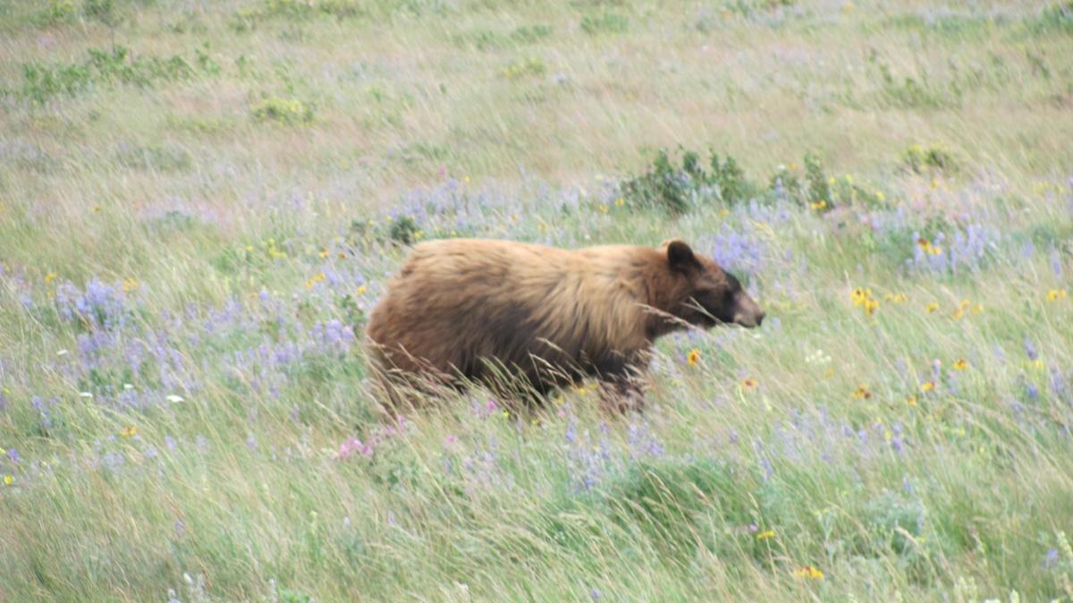 Click image for larger version  Name:Grand Teton National Park 2016-005.jpg Views:112 Size:278.5 KB ID:119146