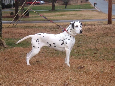 Click image for larger version  Name:dottie.jpg Views:1040 Size:66.6 KB ID:1369