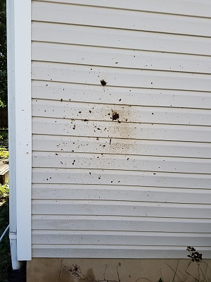 Click image for larger version  Name:What stuck to the wall from the vent line.jpg Views:116 Size:324.1 KB ID:150907
