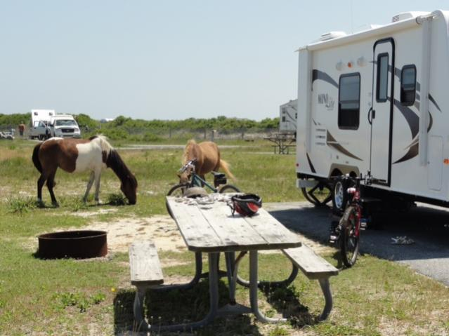 Click image for larger version  Name:Assateague 1.jpg Views:42 Size:43.1 KB ID:15739