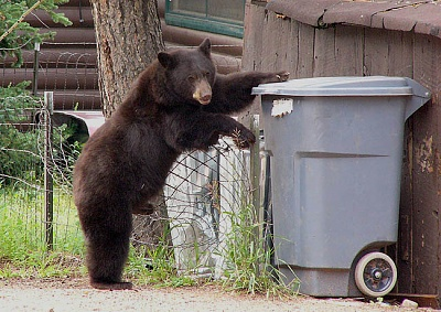 Click image for larger version  Name:BearStanding-P1070754.jpg Views:48 Size:109.4 KB ID:182414