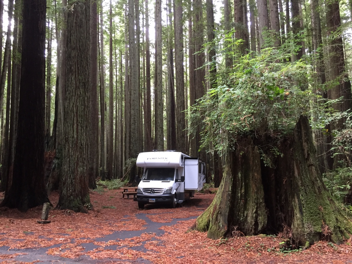 Click image for larger version  Name:RedwoodsCA.jpg Views:38 Size:590.5 KB ID:192208