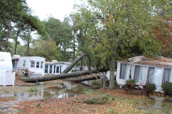 Click image for larger version  Name:tree down!.jpg Views:65 Size:51.1 KB ID:21282