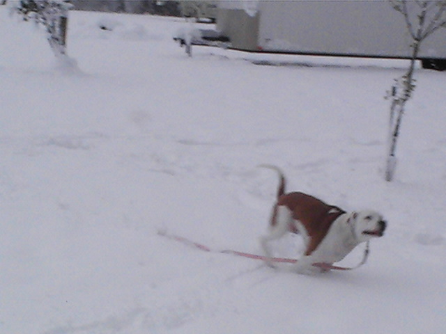Click image for larger version  Name:snow 201074.jpg Views:111 Size:67.2 KB ID:2177
