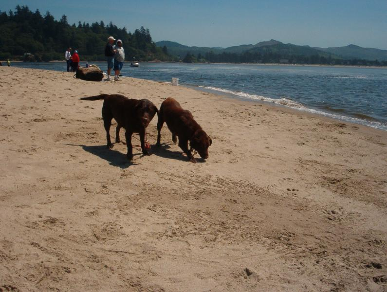Click image for larger version  Name:Oregon vacation (53).jpg Views:203 Size:77.3 KB ID:2213