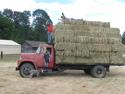 Click image for larger version  Name:Hay truck.jpg Views:47 Size:408.4 KB ID:225189