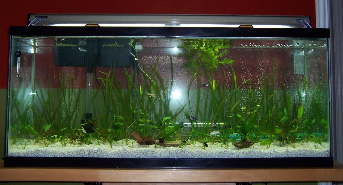 Click image for larger version  Name:aquarium28may07.jpg Views:58 Size:205.8 KB ID:227