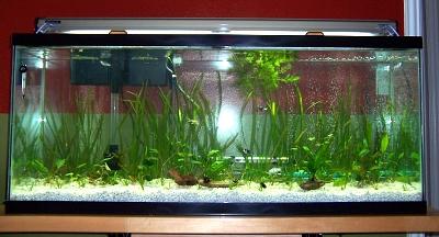 Click image for larger version  Name:aquarium28may07.jpg Views:72 Size:205.8 KB ID:227