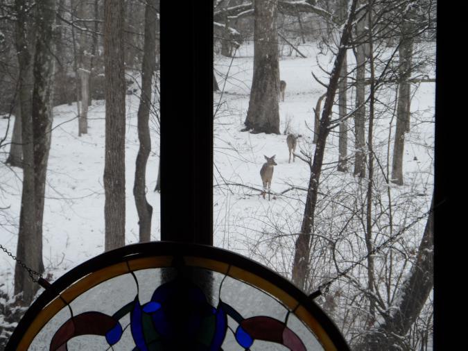 Click image for larger version  Name:deer 2013 009.jpg Views:55 Size:62.1 KB ID:26393