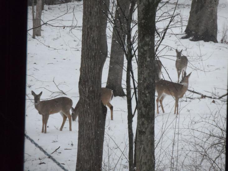 Click image for larger version  Name:deer 2013 012.jpg Views:51 Size:61.4 KB ID:26394