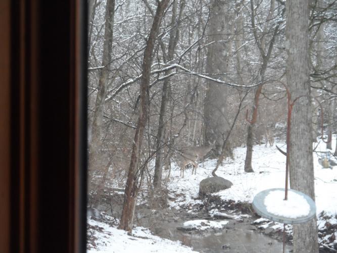Click image for larger version  Name:deer 2013 015.jpg Views:52 Size:59.8 KB ID:26395