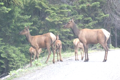 Click image for larger version  Name:elk.jpg Views:44 Size:42.6 KB ID:2781