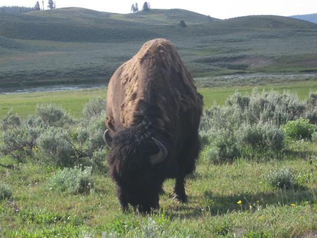 Click image for larger version  Name:Yellowstone_July2012 084.jpg Views:28 Size:54.7 KB ID:30079
