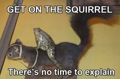 Name:   frog-on-squirrel.jpeg Views: 81 Size:  29.8 KB