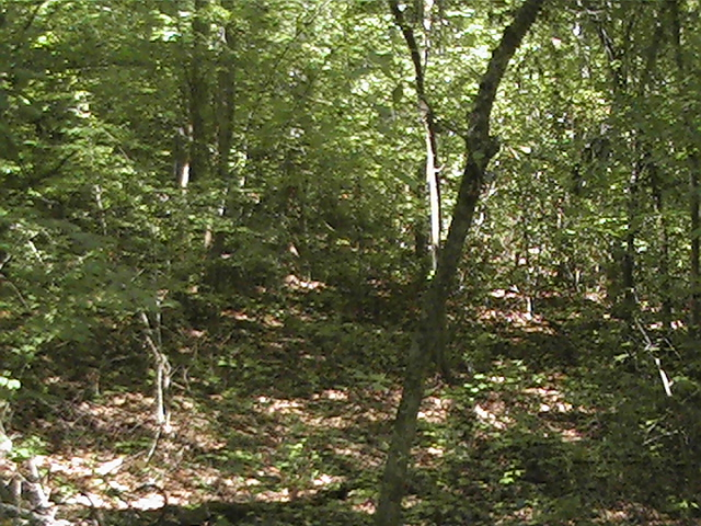 Click image for larger version  Name:Natchez trace17.jpg Views:89 Size:218.6 KB ID:377