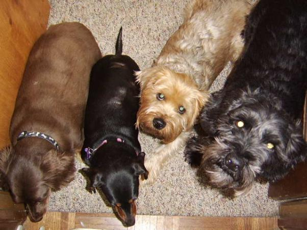 Click image for larger version  Name:Maggie,Emma,Toby, Boz.jpg Views:71 Size:49.9 KB ID:39559
