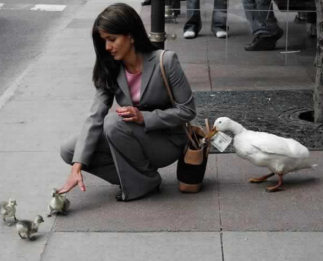 Name:   duck_pickpocket.jpeg Views: 64 Size:  18.5 KB
