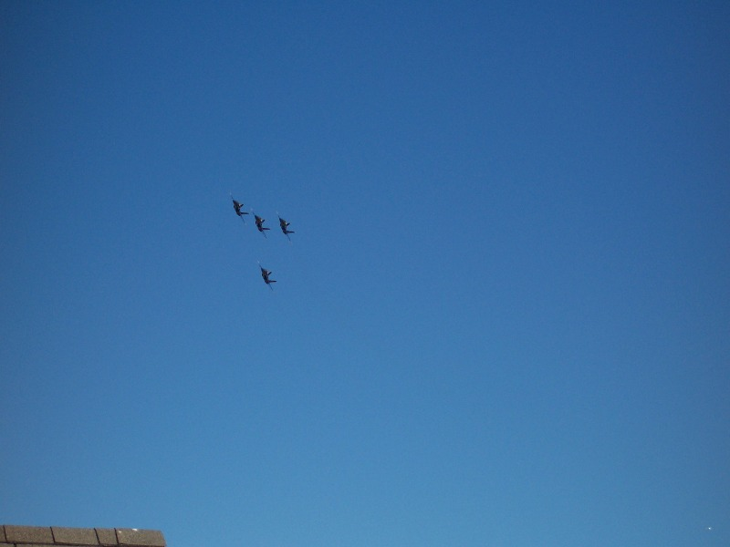 Click image for larger version  Name:blueangles02.jpg Views:65 Size:52.2 KB ID:439