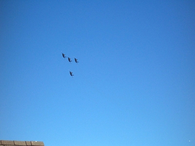 Click image for larger version  Name:blueangles02.jpg Views:94 Size:52.2 KB ID:439