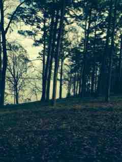 Name:  ImageUploadedByForest River Forums1388587165.493867.jpg Views: 201 Size:  9.2 KB