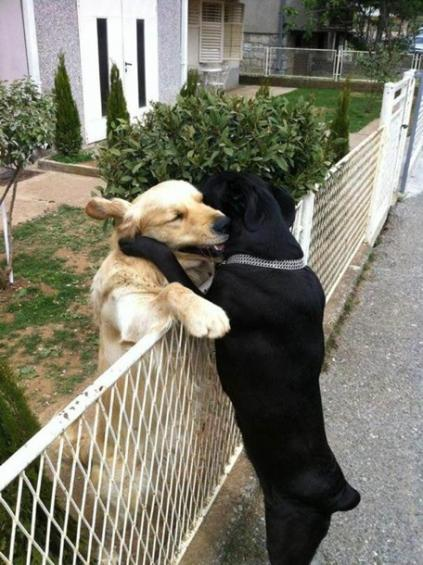 Click image for larger version  Name:2 dogs fence.jpg Views:127 Size:50.2 KB ID:45582