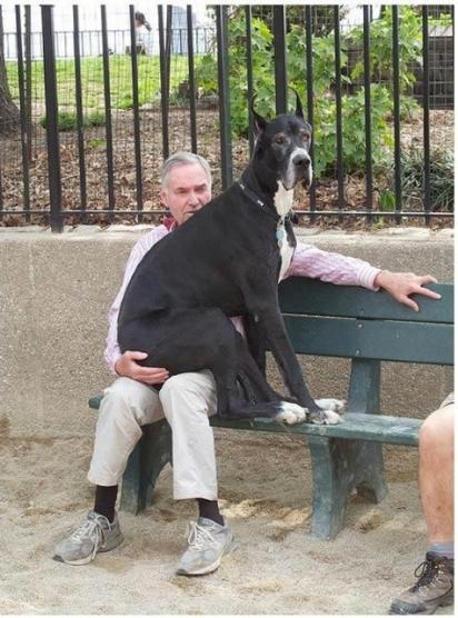 Click image for larger version  Name:dog lap.jpg Views:117 Size:50.8 KB ID:45874
