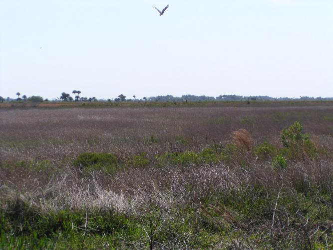 Click image for larger version  Name:Red Tailed Hawk in Flight 2.jpg Views:69 Size:51.0 KB ID:5019