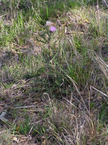Click image for larger version  Name:Wild Flower.jpg Views:68 Size:56.6 KB ID:5038