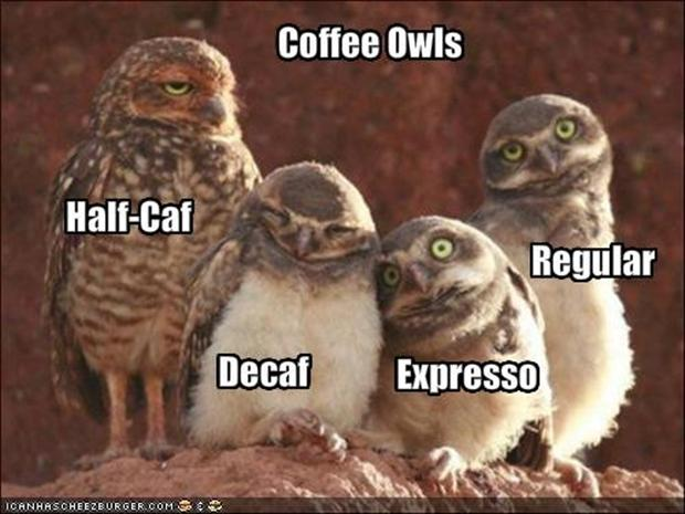 Click image for larger version  Name:coffeeOWLS.jpg Views:58 Size:44.1 KB ID:52343