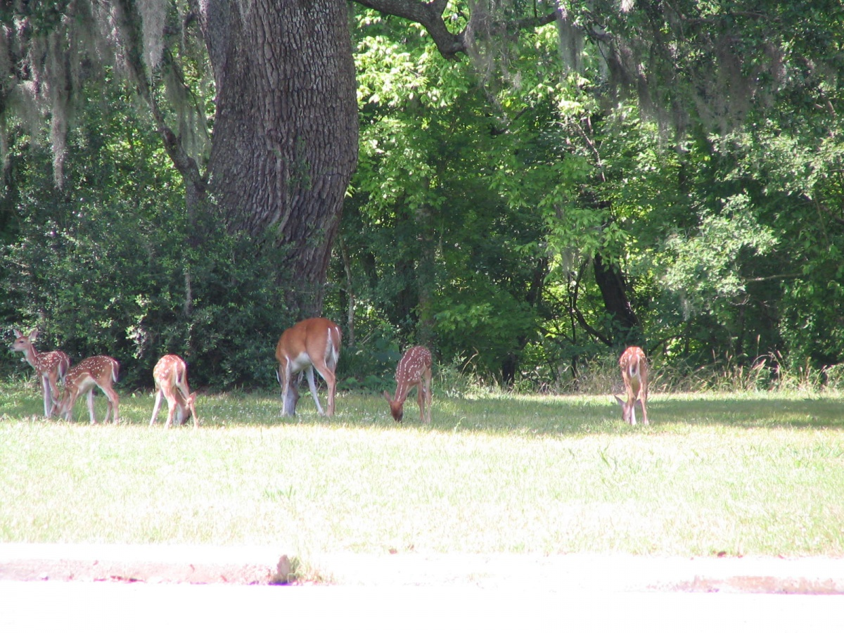 Click image for larger version  Name:Brazos Bend Camping Trip-06-11-14 007.jpg Views:76 Size:491.6 KB ID:55062