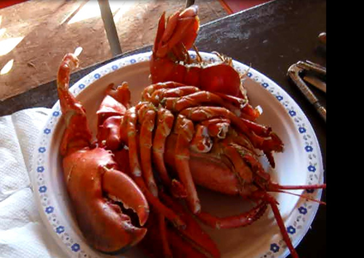Click image for larger version  Name:lobster.jpg Views:80 Size:236.5 KB ID:56623