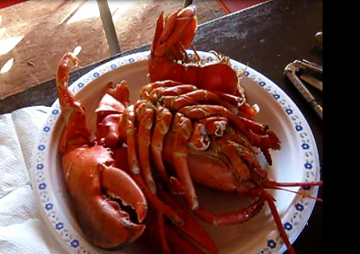 Click image for larger version  Name:lobster.jpg Views:83 Size:236.5 KB ID:56623