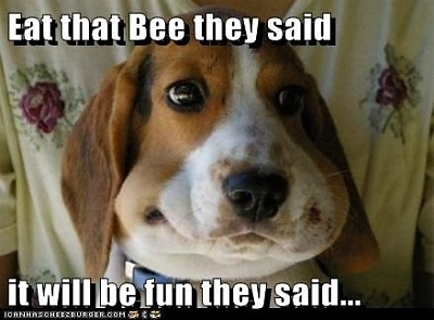 Click image for larger version  Name:bee eating beagle.jpg Views:246 Size:88.2 KB ID:59271