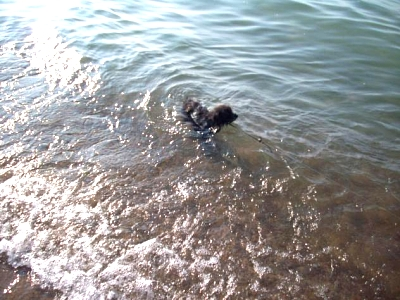 Click image for larger version  Name:mattie lake michigan.jpg Views:76 Size:60.5 KB ID:5965