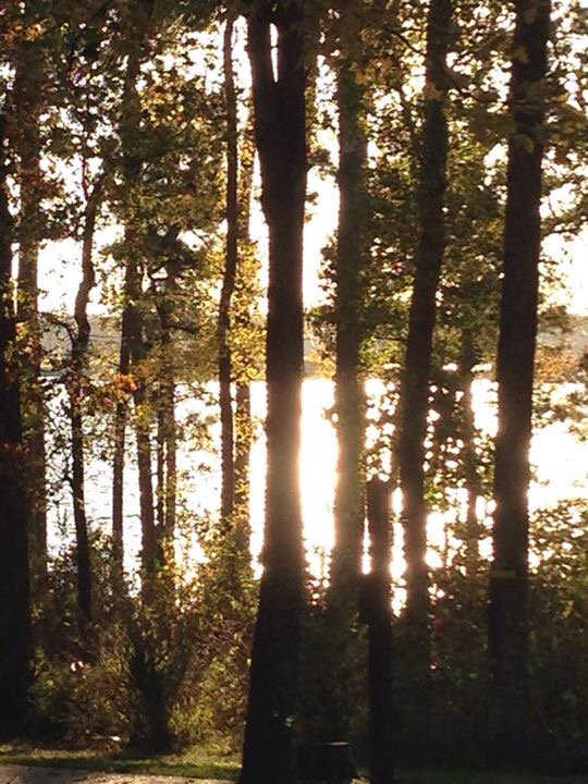 Click image for larger version  Name:ImageUploadedByForest River Forums1417058346.811000.jpg Views:269 Size:461.3 KB ID:66873