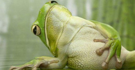 Click image for larger version  Name:frog.png Views:59 Size:168.5 KB ID:69311