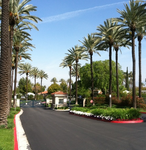 Click image for larger version  Name:Palms5.jpg Views:112 Size:114.2 KB ID:73009