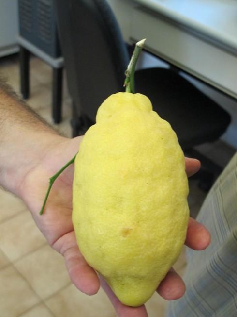 Click image for larger version  Name:Sorrento Lemons.png Views:115 Size:405.1 KB ID:73565