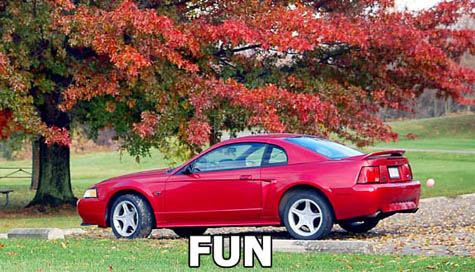 Click image for larger version  Name:Mustang1.jpg Views:67 Size:65.1 KB ID:75877
