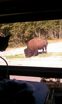 Click image for larger version  Name:jerry bison.jpg Views:64 Size:66.1 KB ID:80828