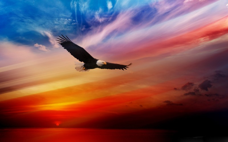 Click image for larger version  Name:Fourth-Of-July-2014-USA-Eagle-Background-800x500.jpg Views:57 Size:52.9 KB ID:82002