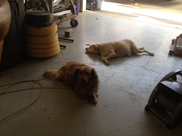 Click image for larger version  Name:fred and dusty.JPG Views:99 Size:96.7 KB ID:85788