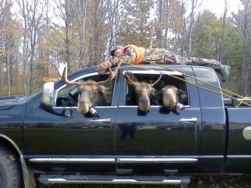 Click image for larger version  Name:Missing Moose Hunter.jpg Views:131 Size:51.7 KB ID:8816