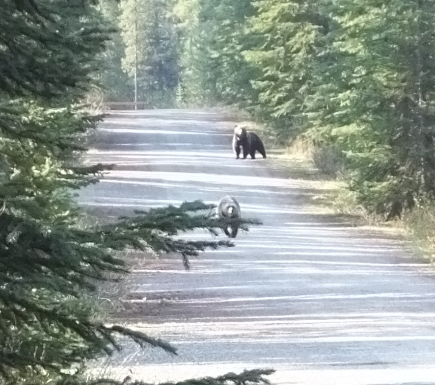 Click image for larger version  Name:Grizzlies.JPG Views:87 Size:211.1 KB ID:88341
