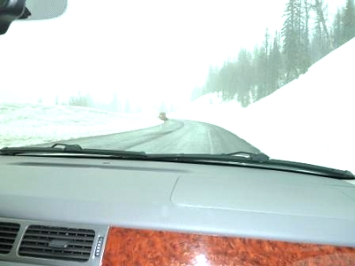 Click image for larger version  Name:snowstorm-2.jpg Views:88 Size:31.2 KB ID:8926