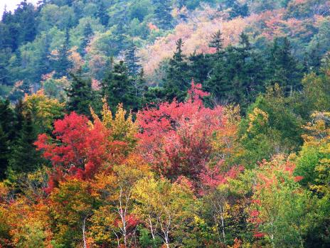 Click image for larger version  Name:9-30-11 Scenes along Conway Scenic Raleroad, NHTrip to Maine  023 (16).jpg Views:105 Size:52.3 KB ID:9183