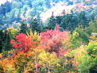 Click image for larger version  Name:9-30-11 Scenes along Conway Scenic Raleroad, NHTrip to Maine  023 (16).jpg Views:106 Size:52.3 KB ID:9183