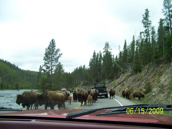 Click image for larger version  Name:6-15-09 Buffalo Jam South entrance to Yellowstone Nat Park 004.jpg Views:50 Size:57.0 KB ID:9347