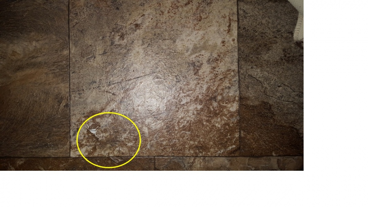Click image for larger version  Name:damaged_floor_3.jpg Views:103 Size:244.6 KB ID:94939